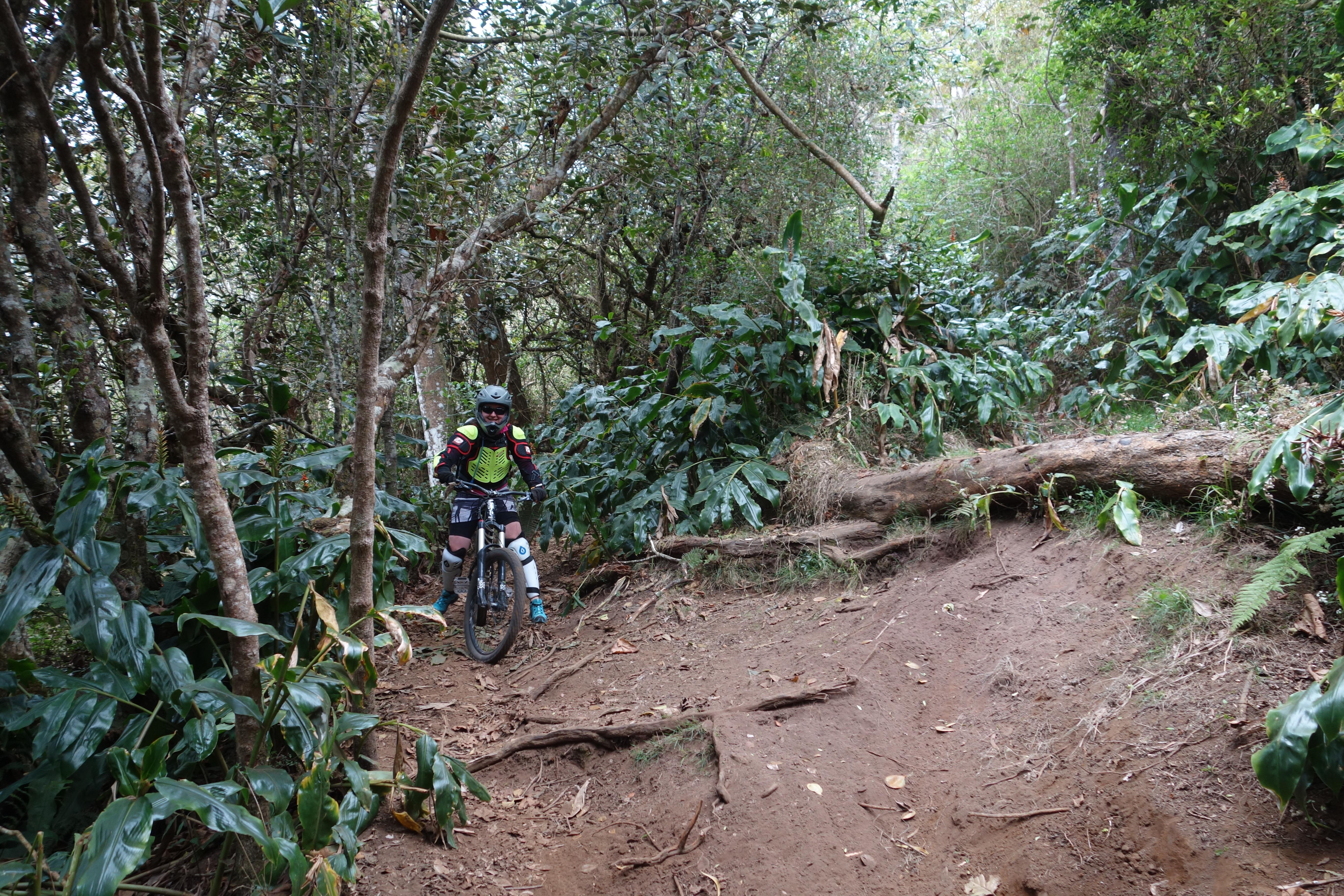 Mitten durch den grünen Urwald